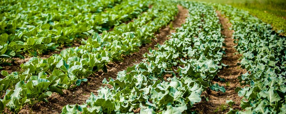 Bioabi, das ist naturnaher und biologischer Anbau