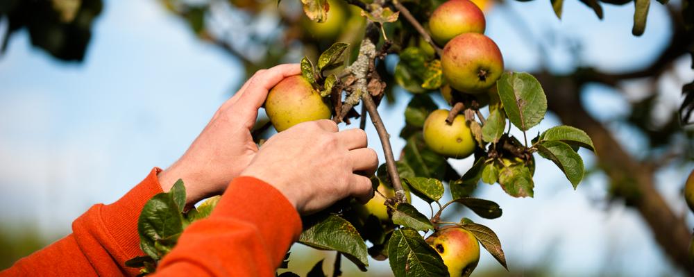 Nachhaltige Landwirtschaft aus der Region